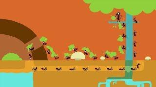 Animanimals: Ant