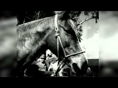 Sgt. Reckless: A Horse of a Different Breed | Grumpy Opinions