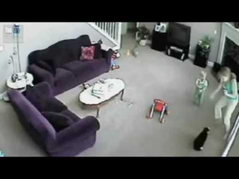 il gatto geloso della babysitter