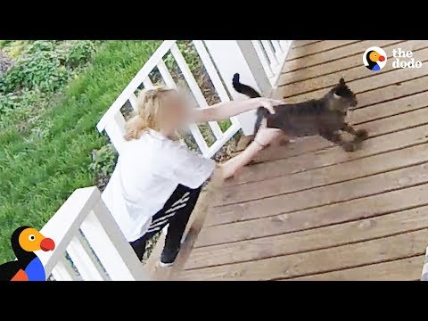 Cat Escapes From Woman Trying to Steal Him - SECURITY FOOTAGE | The Dodo (видео)