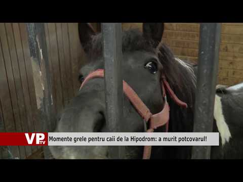 Momente grele pentru caii de la Hipodrom: a murit potcovarul!