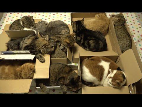 Коробочные коты или кошачий склад