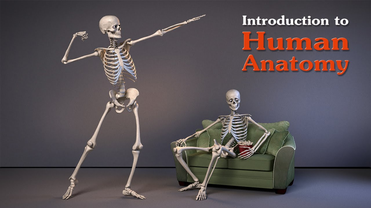 Introduction To Human Anatomy For Artists Lumiverse