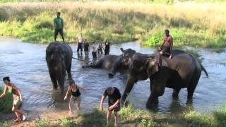 Chitwan Nepal  city images : Bathing Elephants, Chitwan Nepal