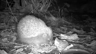 Wildlife Trail Camera - 7.11.2016