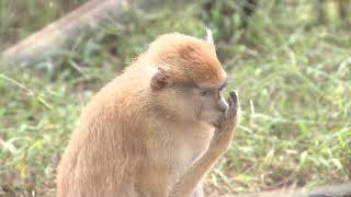 Curso de férias do Zoo de Bauru será online