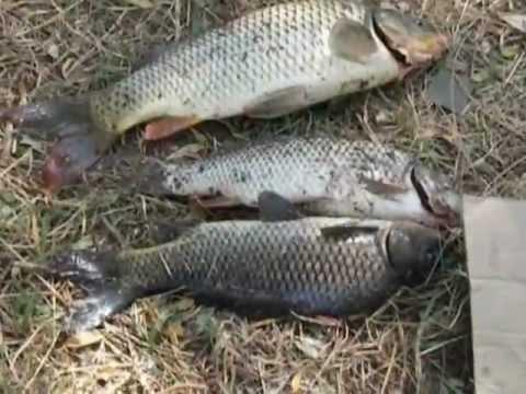 рыбалка в степановке одесской области