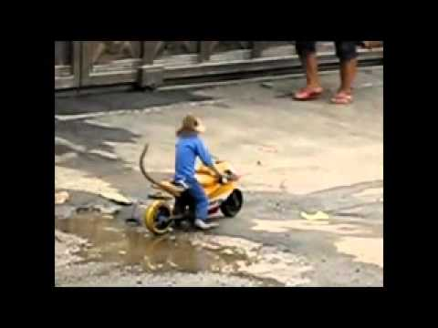 Video Khỉ Chạy Mô tô cực chất
