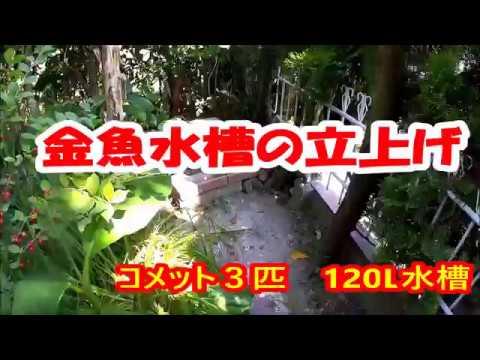 【金魚コメット】金魚水槽の立上げ