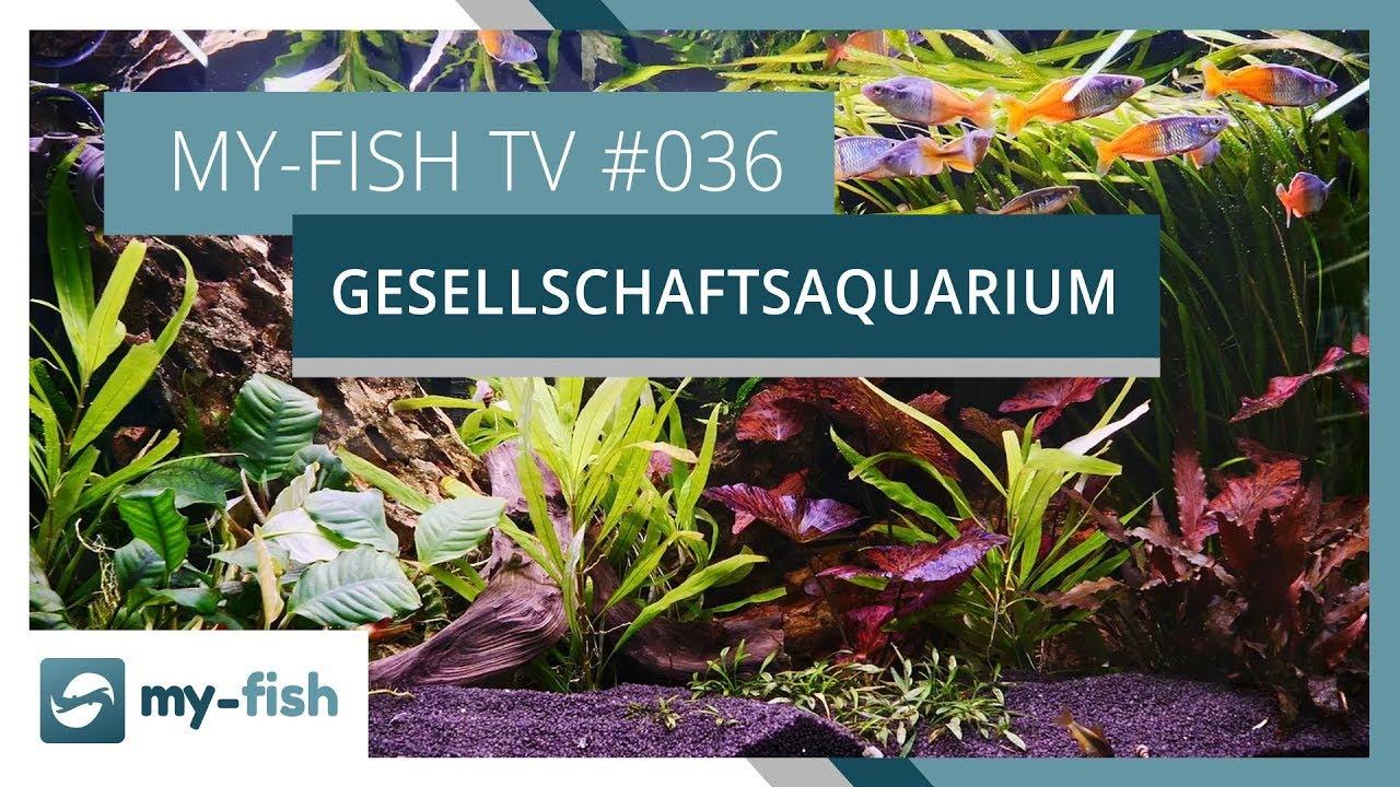my-fish TV - Deine Nr. 1 Anlaufstelle für alle Themen rund um die Aquaristik 28