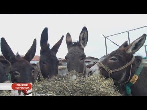 Κοζάνη: Στην Οινόη φάρμα με γαϊδουράκια| 12/02/2019 | ΕΡΤ