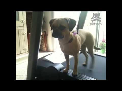 video que muestra a un perro caminando torcido