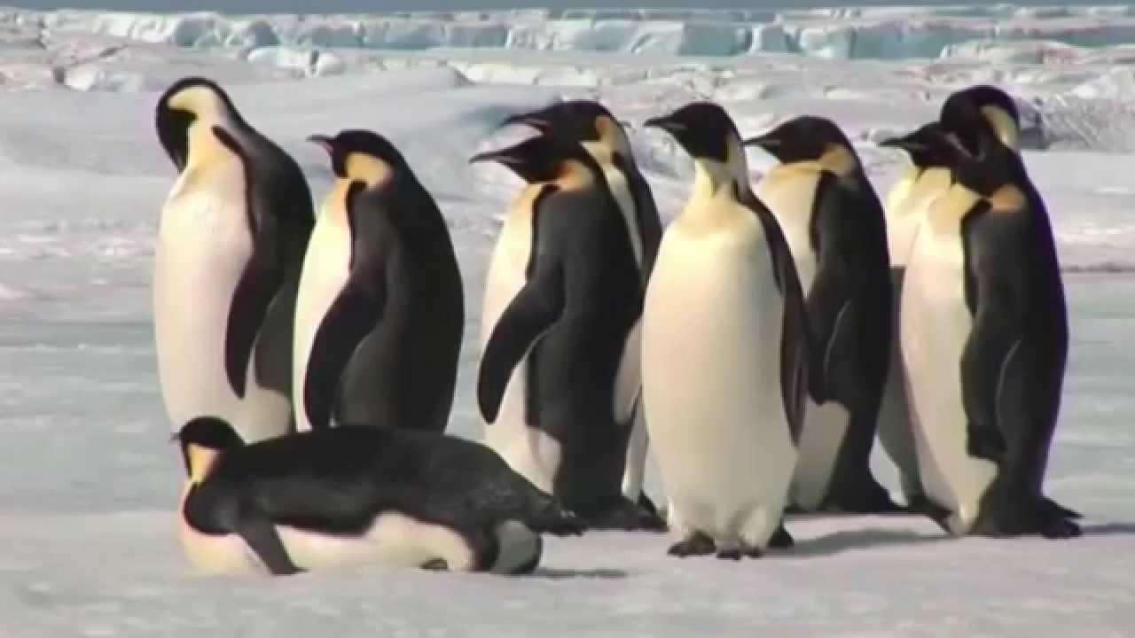 Planetu brázdili obří tučňáci!