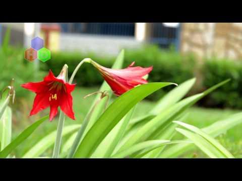Momento HD: Vejo flores em você - Praça Santana - Pirapetinga-MG