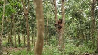 Dibalik Layar Film SOKOLA RIMBA - Bagian 2