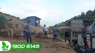 Nông nghiệp | Cần nhất là ngăn chặn buôn bán vận chuyển lậu lợn và các sản phẩm từ lợn qua biên giới