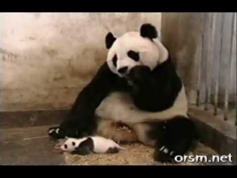 A collection of funny animal videos