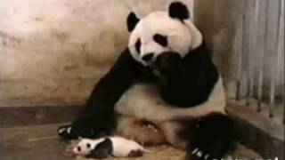 Cute&Funny Collection Of Animal Videos