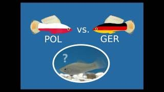 Deutschland vs. Polen