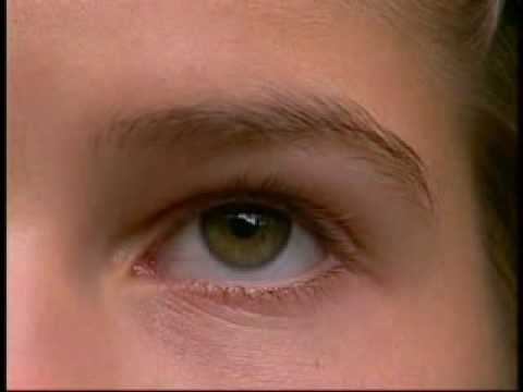 pourquoi l'oeil humain permet il la vision des couleurs