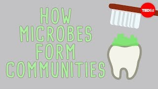 The microbial jungles all over the place (and you) – Scott Chimileski and Roberto Kolter
