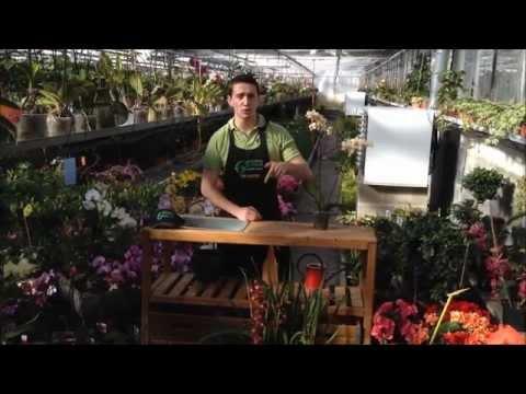 comment traiter cochenille orchidées