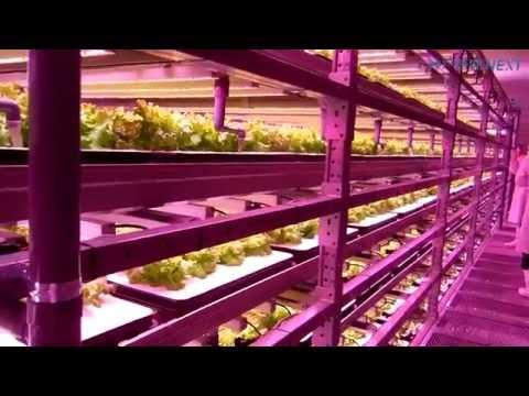 伊東電機のロボットを野菜工場に導入