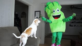 Dog Surprised by Giant Broccoli Prank: Funny Dogs Maymo & Potpie by Maymo