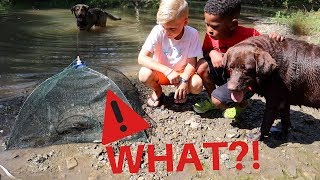 Video They Didn't Expect This in a Minnow Trap! MP3, 3GP, MP4, WEBM, AVI, FLV Agustus 2019