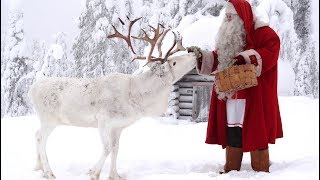 Santa Claus Reindeer dog in Lapland presented to children: Finnish Lapphund Father Christmas kids