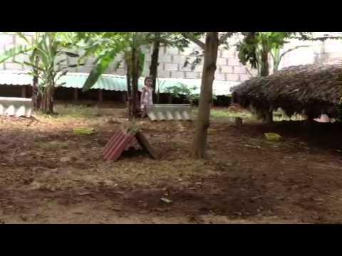 Cheo cheo giống ở Trang trại Động vật hoang dã Thanh Long