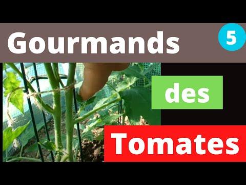 Pincer les Gourmands des Tomates - Comment et Pourquoi ?