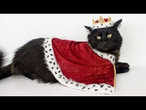 Pet Costume - Royal Robe