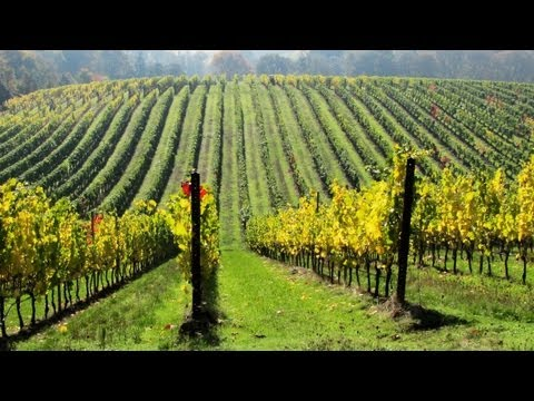 LIVE: A Sustainable Program for Wine Growers and Wineries