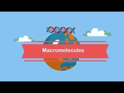 Macromolecules-A Beginners Guide