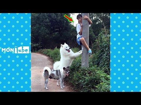 Coi cấm cười 2018 ● Những khoảnh khắc hài hước và lầy lội P8