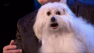 Video Britain's Got Talent 2015 S09E01 Marc Métral with his Hilarious Talking/Singing Dog Wendy Full Video MP3, 3GP, MP4, WEBM, AVI, FLV Maret 2019