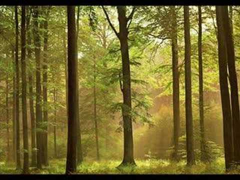 solitudes - Thanks for all the views and nice comments! This is my favorite from Dan Gibson and John Herbermann, from the cd 'Forest Piano'. It's so peaceful and always ...