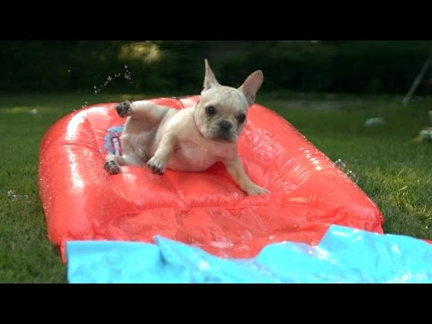 HuffPost x Purina — Watch Puppies Enjoy Their Very First Summer