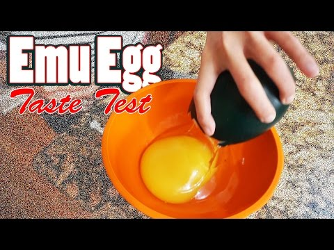 Cooking An Emu Egg! | We Try An Emu Egg For The First Time | Quail Egg - Emu Egg Taste Test