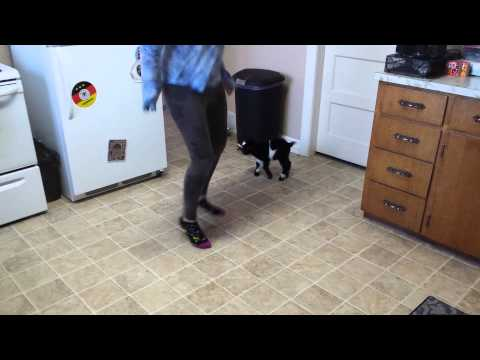 Girl Teaches Baby Pygmy Goat How to Hop