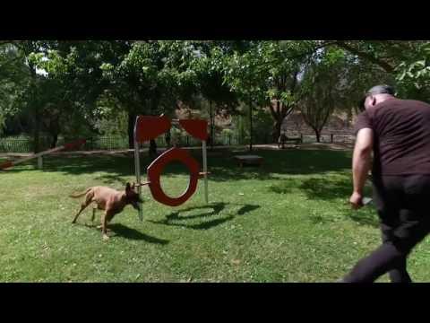 Vídeo sobre AGILITY