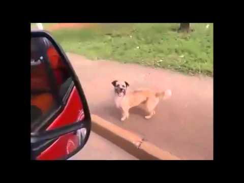 l'impareggiabile amore di un cane