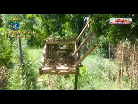Cfs sequestra trappole per uccellini a Dipignano