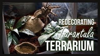 REDECORATING TARANTULA TERRARIUM by Jossers Jungle
