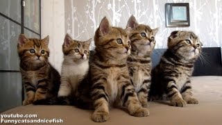 Dancing Chorus Line Of Kittens - Cuteness Overloaded!