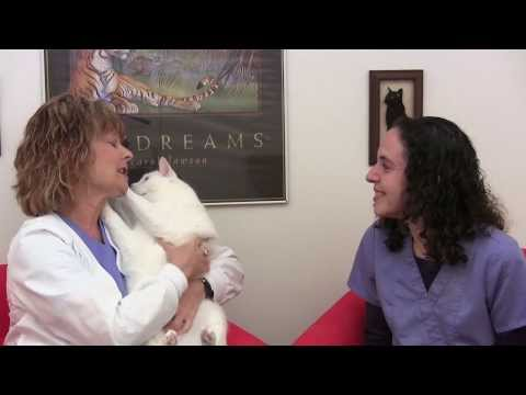 Ask The Cat Doctor TV