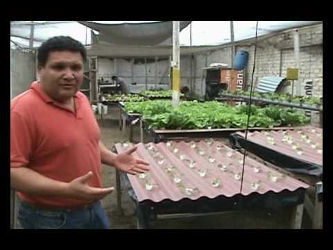 cultivos orgánicos, hidroponía y control natural de plagas