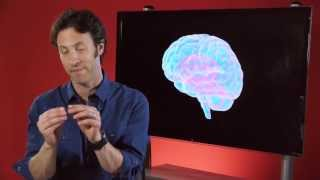 Your Brain is You: A Most Complex System (Part 1 of 6)