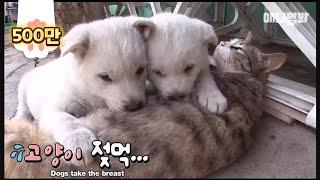 猫母さんの子育て。猫からお乳を飲む子犬たち。